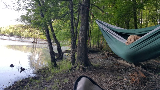 Lake Lanier - Cumming, Georgia, U.S.A.