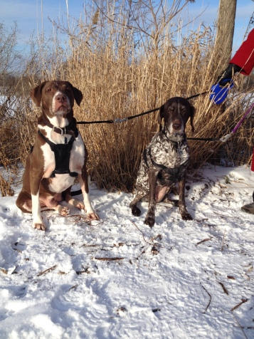 Daisy and Brandy - Chicago, Illinois, U.S.A.