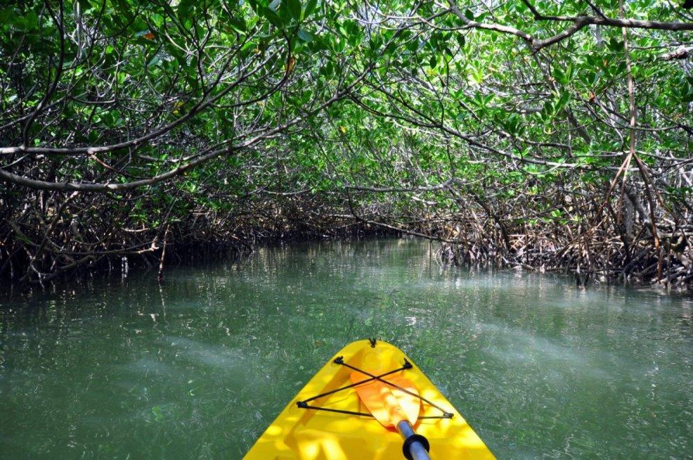 FK2 29 Mangrove Kayaking